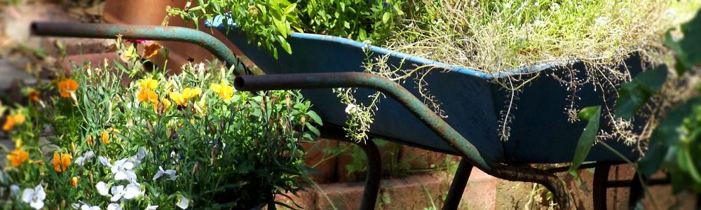 Upcycling brouette jardinière plante verte